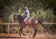 IMG_2202 (TessAnjel) Tags: horse training animal wild cheval espagnol dressage equitation galop trot bai canon photography 55250mm