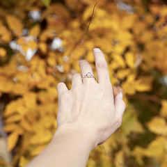 Branching Out (Miss Marisa Renee) Tags: marisarenee missmarisarenee digital digitalphotography canon canon5dmarkii colorado old fall autumn yellow trees branches leaves hand ring reaching soft softfocus shallowdepthoffield pretty