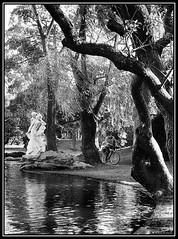 Atravesando el Bosque Encantado (Caro Rolando) Tags: lagos lagosdepalermo palermo buenosaires argentina bosque agua monocromo monocromatico blancoynegro blackandwhite gamadegrises otoño invierno frio díafrio diagris
