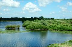 the river Waal......... (atsjebosma) Tags: landschap geese ganzen trees river waal thenetherlands atsjebosma summer zomer clouds wolken nuni june 2017 ngc npc