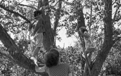 Climbers (Arne Kuilman) Tags: castricum picknick picnic kentmere kentmere100 iso100 blackandwhite homedeveloped rodinalspezial rodinal 135 yashica yashica35gx gx k100 scan epson v600 1200dpi 354311 film believeinfilm rangefinder manualfocus noordhollandsduinreservaat