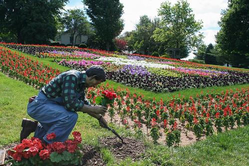 Das Dutchman Essenhaus, Middlebury - Vibrant Blooms in Dresden Plate garden
