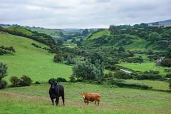 Carey Valley  (Moraine Delta) (Philip McErlean) Tags: carey river valley topography hills valleys grass cows northern ireland ballyvoy fairhead moraine meltwater glaciomarine delta