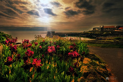 Harbour Lily... (Kerriemeister) Tags: harbour lilys flowers craster northumberland sea coast coastal boats quaint kippers idylic nikon filters