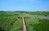 Efteni Gölü (Sinan Doğan) Tags: düzce gölyaka turkey gezi asia anadolu travel lake eftenigölü nikon nature türkiye düzcegezilecekyerler düzcefotoğrafları düzcegezi