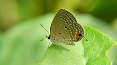 GREAT 7374 (johnjnjj) Tags: 2017 amazing award asia capture canon marco camera natural plant lady place share beautiful squareformat great square focus fujifilm flower prefect dof people pretty pov hongkong hot hit shown light nice nick insect green good bird world cool
