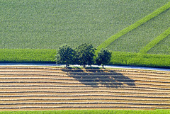 Shady Three (Aerial Photography) Tags: by la ndb 29072004 abendlicht ackerbau baum baumreihe bäume drei feld fotoklausleidorfwwwleidorfde gleisenbach landschaft landwirtschaft laubbaum linie linien luftaufnahme luftbild mais maisfeld s2p43398 schatten sommer stimmung stroh tiefenbach s2p aerial agriculture corn cornfield deciduoustree field foliagetree landscape leaftree line lineoftrees lines mood outdoor rowoftrees shadow straw summer three tree trees tres trois tiefenbachlkrlandshut bayernbavaria deutschlandgermany deu