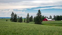 Farm House, Idaho (TomCollins) Tags: idaho teamrust landscape landscapephotography farm farmland farmhouse greenfields blueskies redbarn