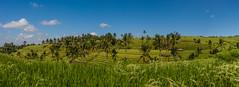 IMG_0646-2 (Ela&Piotr) Tags: bali indonesia indonezja jatiluwih ricefields