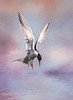 Hovering Forster's Tern (Johnrw1491) Tags: flypaper terns forsters flight hovering textures fine art bird photography color sky clouds nature wildlife marshes summer lake photog