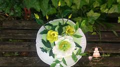 Peony and Lisiantus cake (Albena Bojidarova) Tags: shugar flowers gumpaste cake decorating topper peony lisiantus