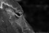 20170520-01220_FB.jpg (StepsThatMatter) Tags: france backpacking jument sonya7ii oeil travel stepsthatmatter trekking wwoofing eye cils bédarieux horse regard voyage