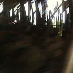 Del tipo metafisico e più struggente (plochingen) Tags: belgium countryside belgio belgica abstract abstrait astratto minimal less derive flou sfocatto icm blur motionblur