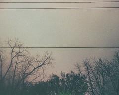 Lines (H o l l y.) Tags: lomography trimlite kodak film analog 110mm lines trees sky fog clouds landscape retro indie vintage