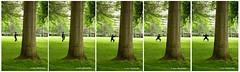 Tai Chi Series 太極五式 - Minoru Park XT4591-96e (Harris Hui (in search of light)) Tags: 太極 harrishui fujixt1 digitalmirrorlesscamera fuji fujifilm vancouver richmond bc canada vancouverdslrshooter mirrorless fujixambassador xt1 fujixcamera fujixseries fujix fuji60mmf24macro fujiprimelens fixedlens taichi collage series taichiseries exercise morningexercise minoru minorupark tree fiveforms gesture pose chinesemartialart martialart