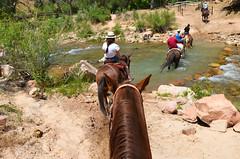 zion horseriding (franbatt) Tags: utah usa roadtrip summer zionnatlpark zionnationalpark horseback riding horseriding nature explore intothewild wild wildness