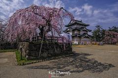 FXT23787 (kevinegng) Tags: japan aomoriprefecture hirosaki hirosakicastlepark sakura cherryblossom 日本 青森県 弘前市 弘前公園 thekeep hirosakicastle