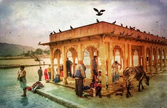 Incredible India series (Nick Kenrick..) Tags: cow puja hindu india temple rajasthan