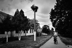 streets of despair (Zlatko Vickovic) Tags: streetstreetphoto streetphotography streetphotographybw streetbw streetphotobw blackandwhite monochrome zlatkovickovic zlatkovickovicphotography novisad serbia vojvodina srbija dyingtimeserbia photojournalism documentary