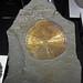 Pyrite concretion (Anna Shale, Middle Pennsylvanian; Sparta area coal mine, Illinois, USA) 8