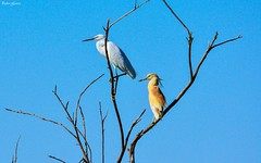 In the morning (Peideluo) Tags: pájaro birds animals