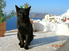 Έλληνες γάτα (Santorini black cat) (VauGio) Tags: santorini grecia cat blackcat gattonero mare sea isola island greece nikon e4600