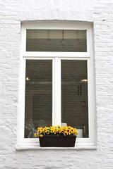 Damme (Brian Aslak) Tags: damme westvlaanderen vlaanderen flanders flandre belgië belgique belgium europe window janela ventana flowers