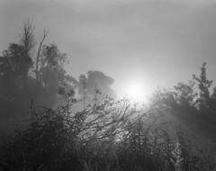 My favorite spot at sunrise // Ulubione miejsce, wschód słońca (Other dreams) Tags: pomerania polish landscape vistulalandscapepark dragacz misty sunrise bw film 6x7 fp4 paranols pentax6x7 smcpentax55mm wideangle nature bushes grass twigs trees