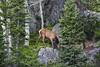 Elk in Estes Park (Yer Photo Xpression) Tags: laurencrocker estespark rockymountainnationalpark canoneos40d elk