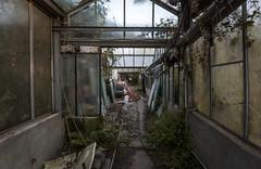 DSC_6140 (Foto-Runner) Tags: urbex lost decay abandonné car auto voitures ancêtres épave