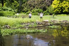 2017-06-18 Virginia Water Savill Gardens IMG_9050 (Darkstar Moody) Tags: virginiawater savillgardens plants flowers trees water ponds lakes wildlife gardens flora fauna
