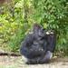 MonkeyJungle12