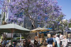 Purple trees! Really! (Tim Brown's Pictures) Tags: california sanddiego littleitaly farmersmarket produce fresh horizontal blossomingtrees jacaranda treespurple