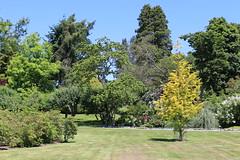 Metasequoia glyptostroboides-30 (The Tree Library (TreeLib.ca)) Tags: metasequoiaglypsroboides dawnredwood