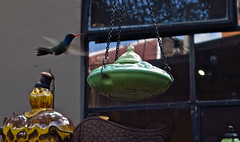 Shop selling Colibri feeders (rainy city) Tags: store sanmigueldeallende hummingbird mexico
