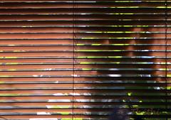 170619 fsN 170621 © Théthi (thethi (pls read my first comment, tks)) Tags: saison été juin fenêtre store lumière ombre soleil chaleur canicule météorologie sécheresse belgique belgium ligne inviterub faves37