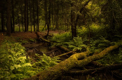 Between two rains (_light hunter_) Tags: forest stream moss tree nature