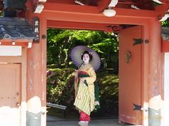 Maiko_20170528_60_9 (kyoto flower) Tags: eishoin temple tomitsuyu kyoto maiko 20170528 舞妓 栄摂院 富津兪 京都 hayasgiemi