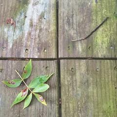 Porch Debris (whatsayjk) Tags: minimal texture outdoor storm nature iphone detail contrast porch green arkansas minimalism lines line square quarter wood tree leaves