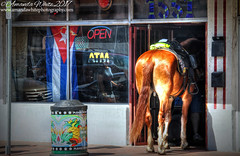 Something you don't see everyday! (sminky_pinky100 (In and Out)) Tags: horse shop littlehavana miami usa travel tourism streetphotography unusual outside omot animal policehorse
