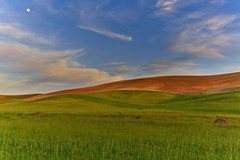 Moon over the Palouse (Alan Amati) Tags: amati alanamati america american usa us washington wa pacificnorthwest nw northwest colfax steptoe spokane fields field wheet goldenhour sunset moon landscape farm wheat hill hills rolling clouds sky hay bales agriculture