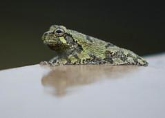 Parklands-0585_5x7 (Mike WMB) Tags: floyd fork parklands frog