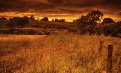 Darker days (xDigital-Dreamsx) Tags: countryside country rural nature outdoors weather fence green grass field trees tree atmosphere scotland scenery mood landscape paysage crop clouds cloud sky golden copper red yellow sunlight sunshine