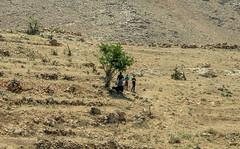 Dohuk and Sinjar Mountain  (95 of 267) (mharbour11) Tags: iraq erbil duhok hasansham babaga bahrka mcgowan harbour unhcr yazidi sinjar tigris mosul syria assyria nineveh debaga barzani dohuk mcgowen kurdistan idp