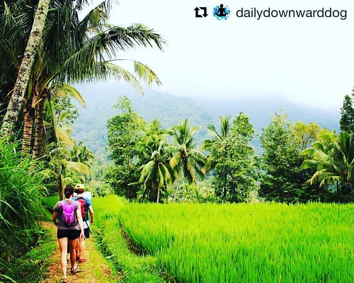 #Repost @dailydownwarddog with @repostapp ・・・ #TBT to the beautiful rice fields, mountains, and hiking to the waterfalls in Bali. It was an epic day! Is Bali on your bucket list? If the answer is YES, click the link in my profile for deets on the Shanti,