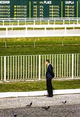 Onde estão os cavalos? / Where are the horses? (jadc01) Tags: animals birds d3200 depthoffield detail jockeyclub nikon nikon18140mm pessoas riodejaneiro streetphotography