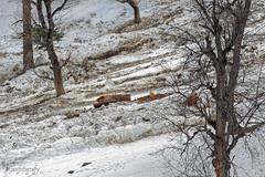 Snow 28 ... (Bijanfotografy) Tags: nikon nikond800 nikon180mm28afd india sonamarg kashmir jk jammukashmir mountains snow