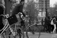 170505_BW_GoingPlaces.jpg (L.Charl de Klerk) Tags: blur bicycle netherlands street city outdoor vehicle animal holland basset road monochrome basket dog outside hound blackandwhite europe amsterdam transport