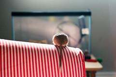 Gerbil Butt (Mushi Kid) Tags: gerbil pet stripes red sunlight film kodak ektar summer lazy nikon fm3a 50mm animal tail cute