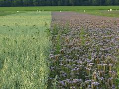 IMG_9121 (germancute) Tags: outdoor nature wildflower flower blume landscape landschaft thuringia thüringen germany germancute deutschland